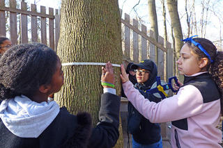 Students calculating tree circumference