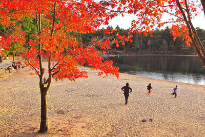 Autumn at Walden Pond © Richard Primack