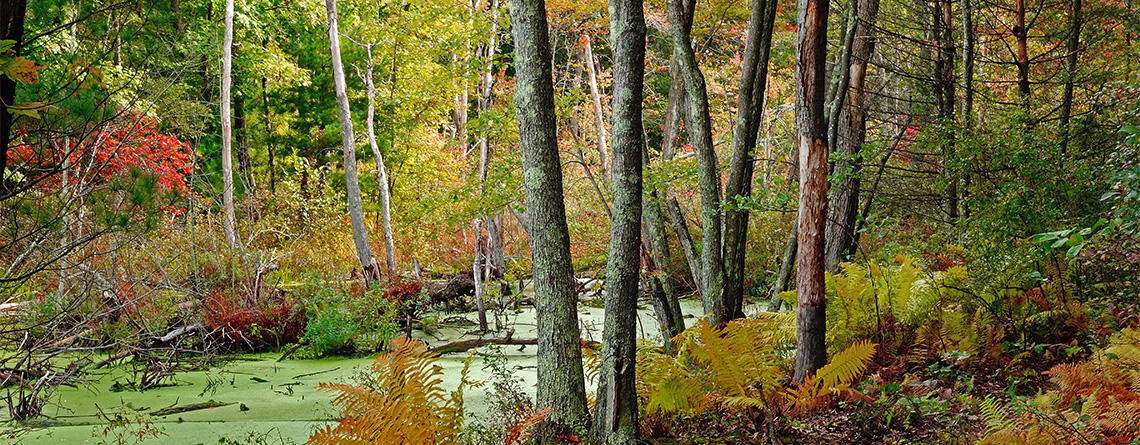 Broadmoor stream & woods in autumn © Art Donahue