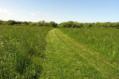 Mowed path through grasslands at Daniel Webster Wildlife Sanctuary