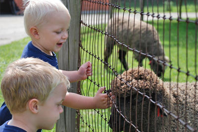 Boys smiling at sheep through fence