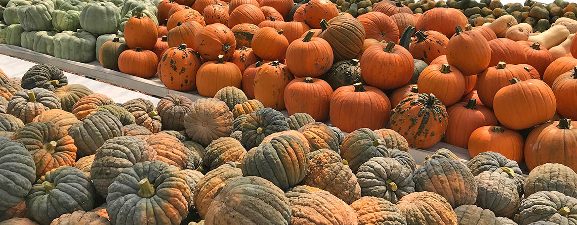 Colorful variety of pumpkins in the greenhouse at Drumlin Farm Wildlife Sanctuary