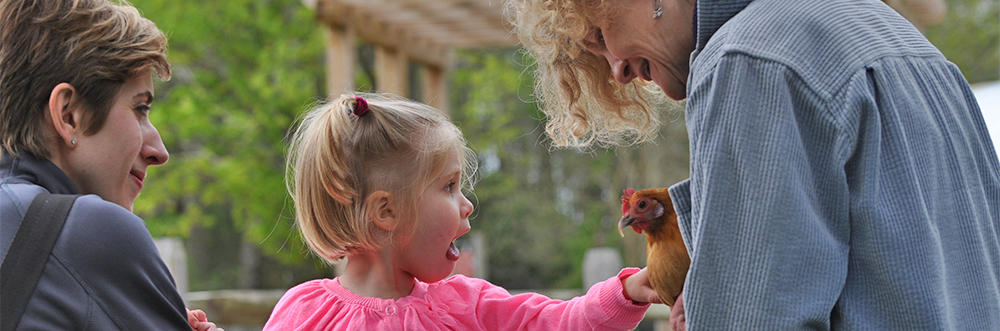 Child petting a chicken during a Drumlin Farm birthday party