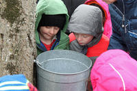 Examining a sap bucket during Winter Vacation Week
