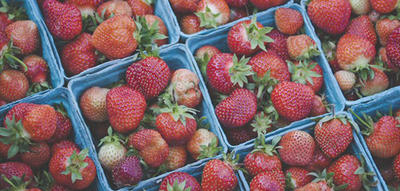 Close-up view of pints of Drumlin Farm strawberries