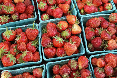 Pints of spring strawberries from Drumlin Farm Wildlife Sanctuary