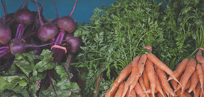 Freshly-harvested beets and carrots from Drumlin Farm's CSA