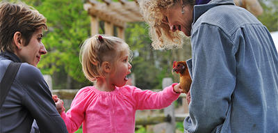 Small child petting chicken at Drumlin Farm