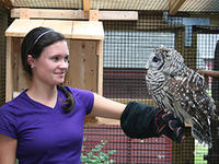 Owl in our wildlife care program