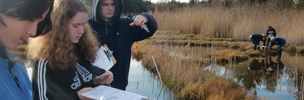 Students taking saltmarsh data