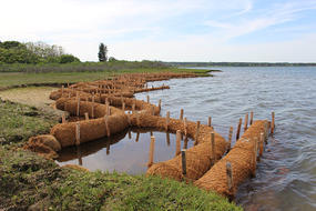 Living shoreline restoration project at Felix Neck
