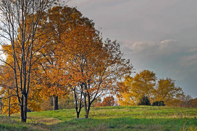 Meadow trees in fall