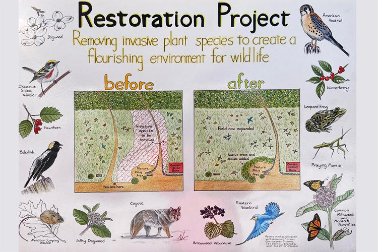Artwork depicting the habitat restoration project at Ipswich River Wildlife Sanctuary © Doreen Bolnick
