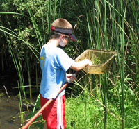 a boy with a pond net