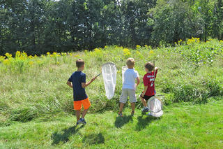 Boys going insect netting in a meadow