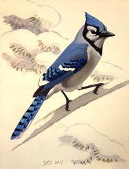 David Allen Sibley, Blue Jay painting