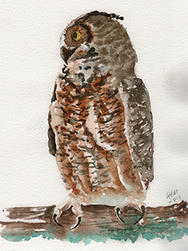 Great Horned Owl watercolor by Sandy McDermott