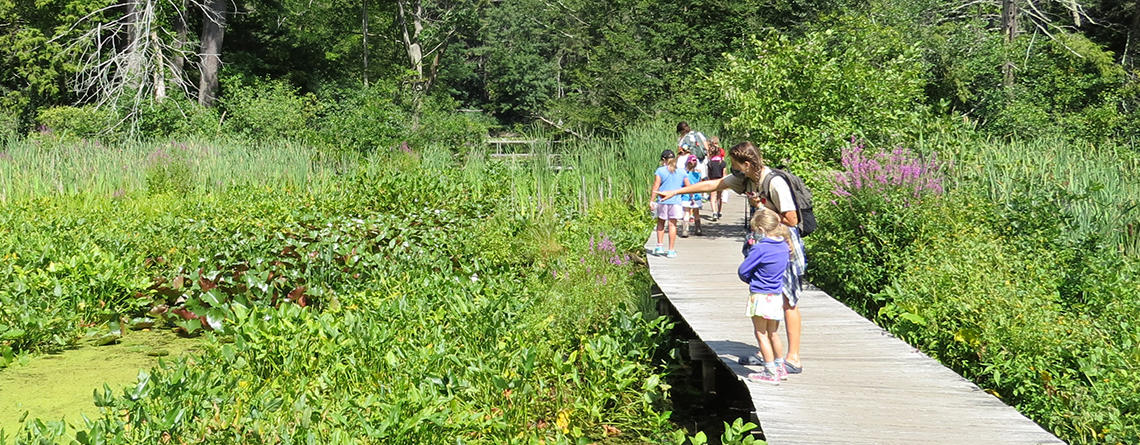 Ipswich River Nature Campers walking on the boardwalk in summer (by Scott Santino/Mass Audubon)