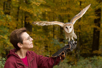 Julie Anne Collier with Barn Owl © Jim Parks / Wingmasters