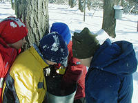 Kids looking in a sap bucket at Ipswich River Wildlife Sanctuary