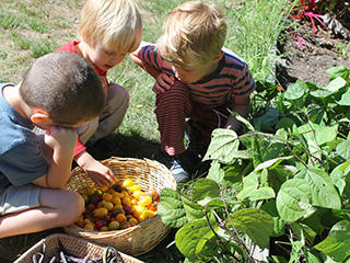 Nature Preschool Boys Picking Tomatoes 320
