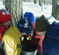 Scouts looking at a sap bucket