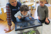 Teacher naturalist encouraging boy to investigate a plant tank