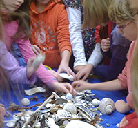 Students sorting shells during a Joppa Flats Education Center program