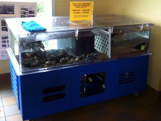 Touch tank at Joppa Flats Education Center