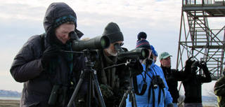 Winter birding at Plum Island with Joppa Flats Education Center