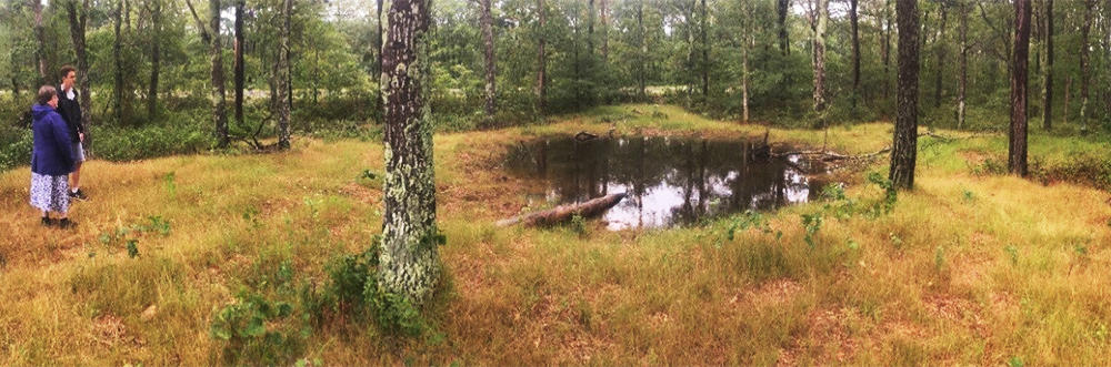 A liner wetland at Falmouth High School 1yr after creation