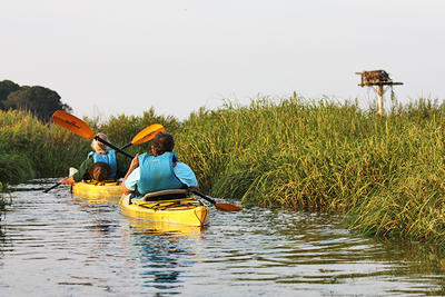 Kayaking by an active Osprey nesting pole at Long Pasture Wildlife Sanctuary