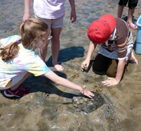 Kids with a horseshoe crab