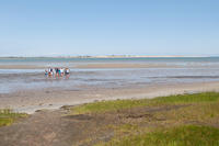 Tidal flats at Long Pasture in summer © AnnMarie Lally