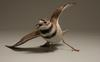 Killdeer © Larry Barth, private collection
