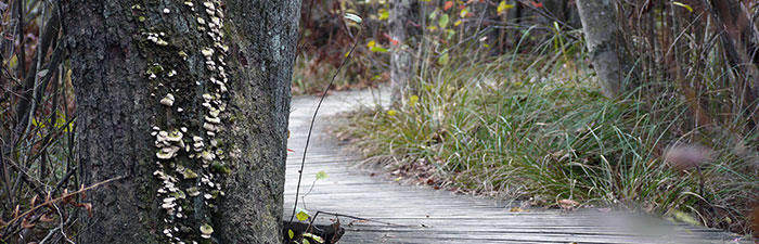 Boardwalk trail at Moose Hill Wildlife Sanctuary © Rosemary Mosco, Mass Audubon