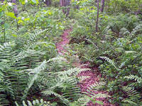 Trail at North River Wildlife Sanctuary © John Galuzzo, Mass Audubon