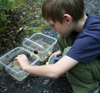 A boy looking at pond creatures at Oak Knoll Wildlife Sanctuary