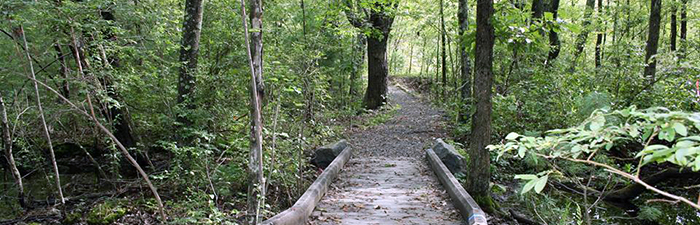Trail at Oak Knoll Wildlife Sanctuary