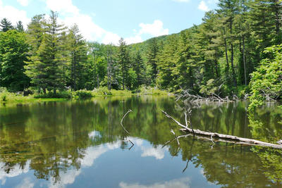 Pike's Pond in June at Pleasant Valley Wildlife Sanctuary