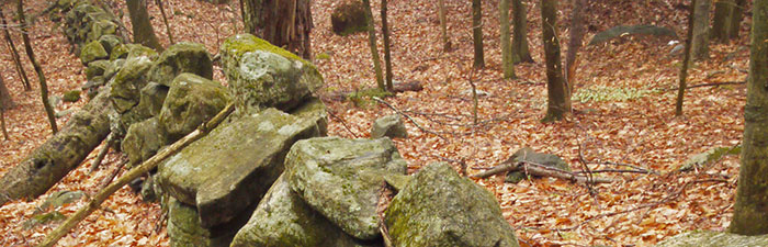 Stone wall in the woods at Richardson Brook Wildlife Sanctuary