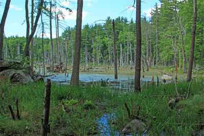View of beaver pond and heron rookery at Rocky Hill