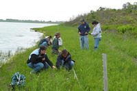 Removing invasive purple loosestrife