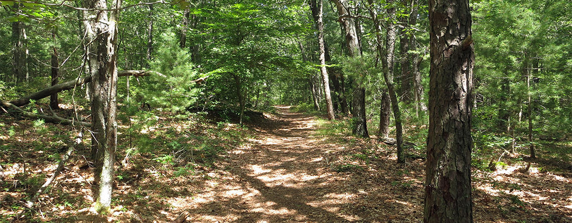 Trail at Skunknett River Wildlife Sanctuary (Photo: Rosemary Mosco)