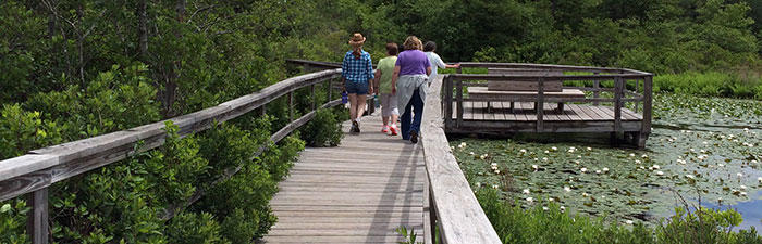 Boardwalk trail at Stony Brook Wildlife Sanctuary