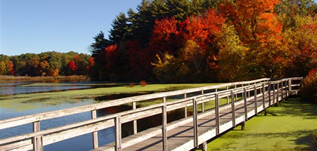 Boardwalk at Stony Brook Wildlife Sanctuary