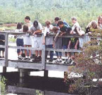 A School group on a wooden foot bridge