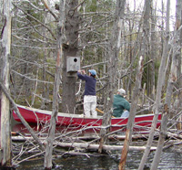Checking nesting boxes by canoe © Richard Johnson