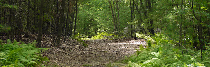 Trail at Waseeka Wildlife Sanctuary
