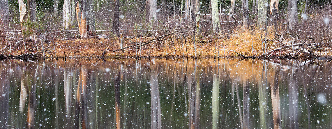 The pond at Waseeka Wildlife Sanctuary during a mid-winter snowfall © Cheryl Rose